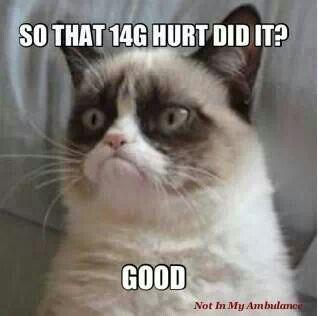 6aa397e8626c7cbacf8f6c16ea45b9e1--grumpy-cat-meme-grumpy-kitty